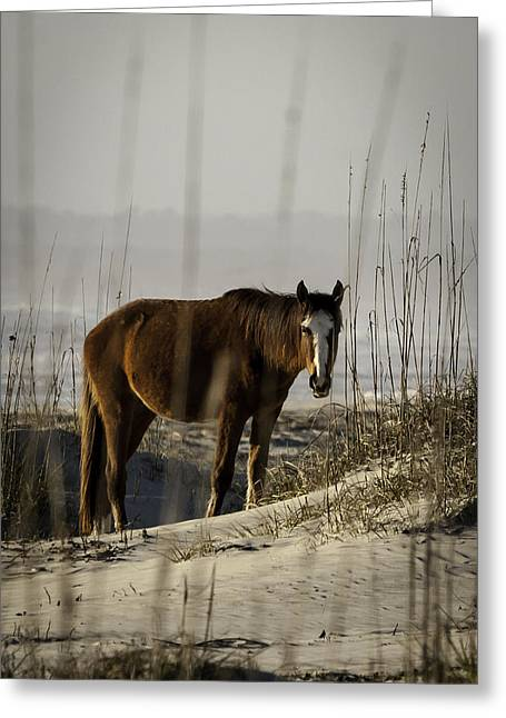 Sea Horse Greeting Cards - Wild Beach Horse Greeting Card by Jamie Anderson