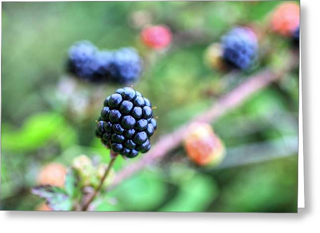 Black Berries Photographs Greeting Cards - Wild Berries  Greeting Card by JC Findley