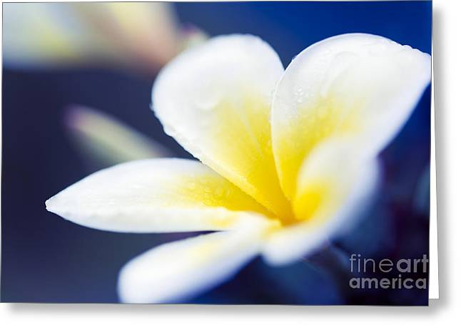 Tropical Flowers Of Hawaii Greeting Cards - Wild Blue Morning Greeting Card by Sharon Mau