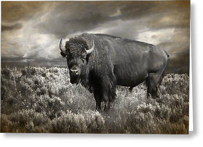 Wild Buffalo In Yellowstone Greeting Card by Randall Nyhof