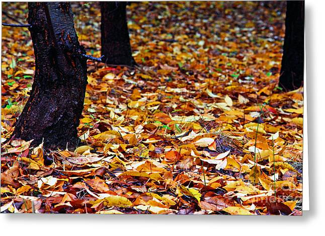 Fallen Leaf Greeting Cards - Wild Cherry Leaves Greeting Card by Thomas R Fletcher