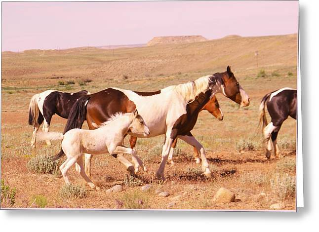 Living Things Greeting Cards - Wild colt Greeting Card by Jeff  Swan