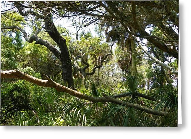 Cedar Key Greeting Cards - Wild Florida in Green Greeting Card by Sheri McLeroy