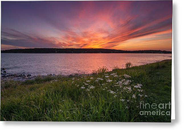 Maine Lighthouses Greeting Cards - Wild Flower Sunset Greeting Card by Michael Ver Sprill