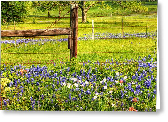 Wild Flowers Of Texas Greeting Cards - Wild Flowers and a Fence Greeting Card by Charles McKelroy
