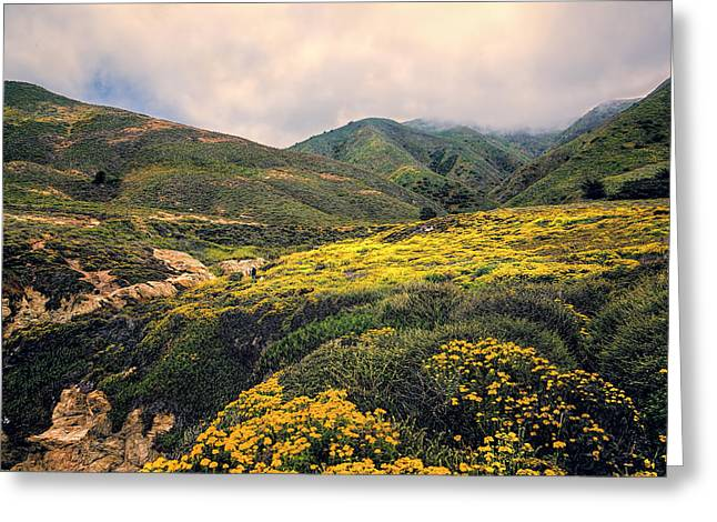 Big Sur Greeting Cards - Wild Flowerk Field Greeting Card by Maria Coulson