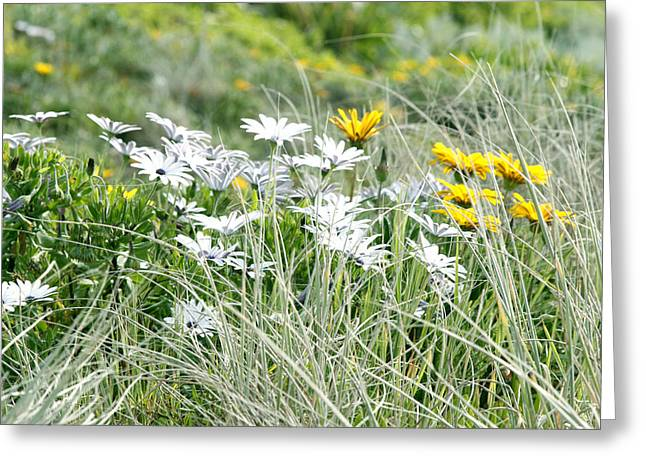 Flower Photos Greeting Cards - Wild flowers Greeting Card by Les Cunliffe