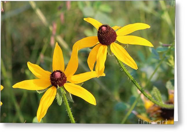 Wild Flowers Greeting Card by Lori Tordsen