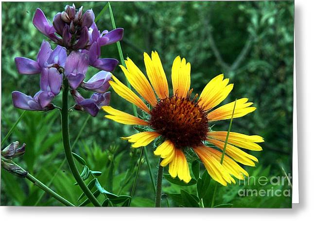 Wild Flowers Greeting Card by Mario Brenes Simon