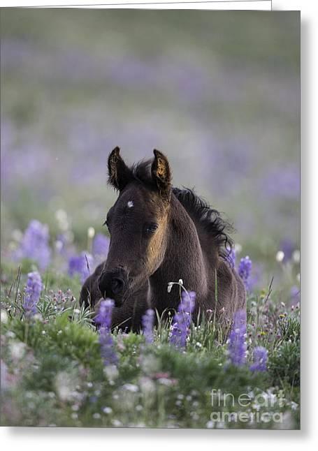 Pryor Greeting Cards - Wild Foal at Dawn Greeting Card by Carol Walker