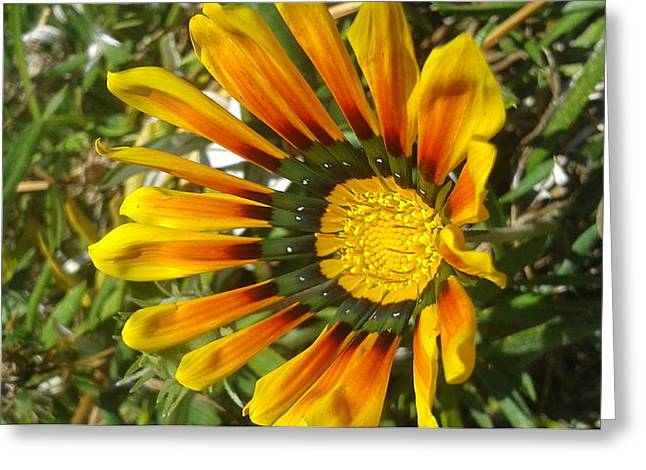 Shower Curtain Greeting Cards - Wild Garden Greeting Card by William Goodson