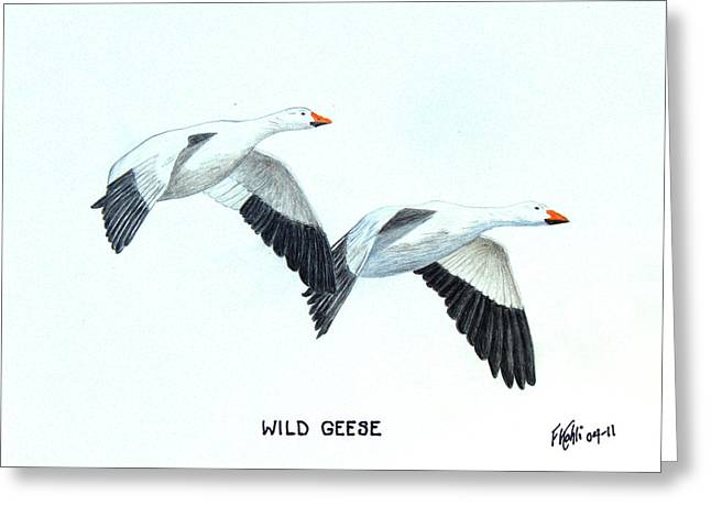 Wild Life Drawings Greeting Cards - Wild Geese Greeting Card by Frederic Kohli