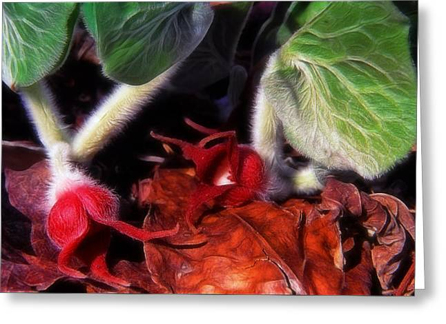 Wild Ginger Greeting Card by Bill Morgenstern