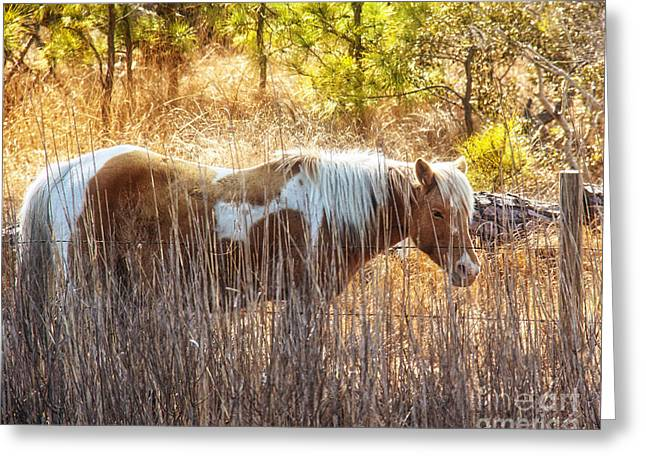 Ocean Mammals Greeting Cards - Wild Horse Of Assateague Greeting Card by Tom Gari Gallery-Three-Photography