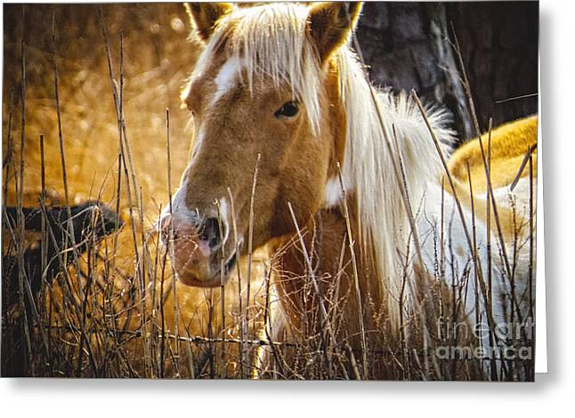 Panoramic Ocean Greeting Cards - Wild Horse of Chincoteague Greeting Card by Dawn Gari