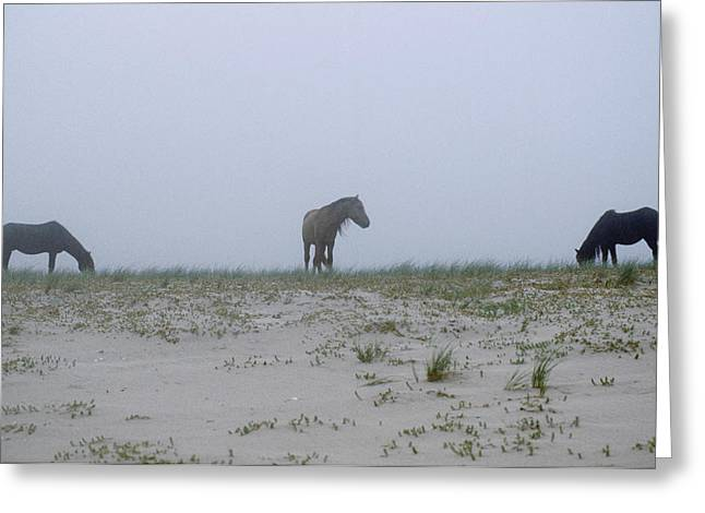 Wild Horses In The Sand Dunes On Sable Greeting Card by Justin Guariglia