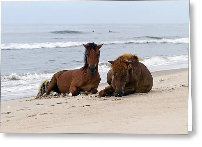 Best Sellers -  - Surf City Greeting Cards - Wild Horses of Assateague Island Greeting Card by Edward Kreis