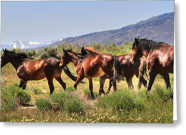 Canon 7d Greeting Cards - Wild Horses of Nevada Greeting Card by Donna Kennedy