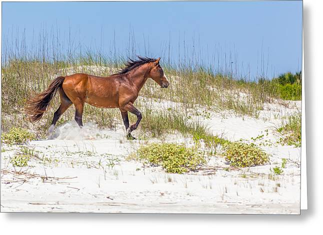 Beautiful Horse Photography Greeting Cards - Wild Horses on Cumberland Island 2 Greeting Card by A Different Brian Photography