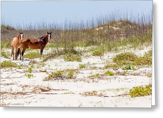 Beautiful Horse Photography Greeting Cards - Wild Horses on Cumberland Island Greeting Card by A Different Brian Photography
