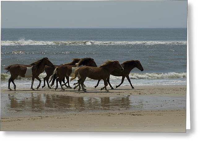 Horses In Nature Greeting Cards - Wild  Horses Run On The Beach Greeting Card by Stacy Gold