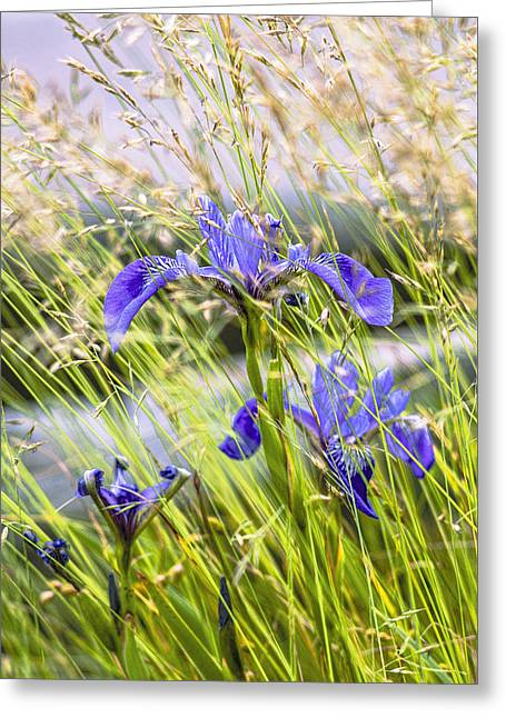 Wild Irises Greeting Card by Marty Saccone