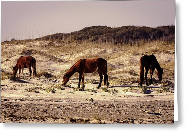 Sea Horse Greeting Cards - Wild Island Horses Greeting Card by Jamie Anderson