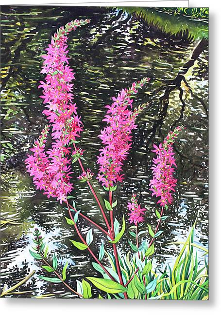 Flower Drawings Greeting Cards - Wild Loosestrife Greeting Card by Christopher Ryland