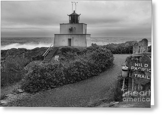 Wild Pacific Trail Black And White Lighthouse Greeting Card by Adam Jewell