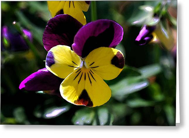 Wild Pansy Greeting Card by Don  Wright