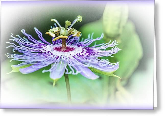 Passiflora Digital Art Greeting Cards - Wild Passion - Floral Greeting Card by Barry Jones