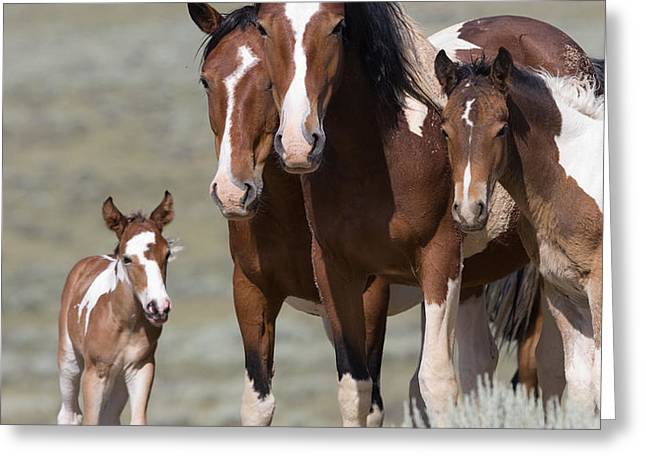 Wild Pinto Family Greeting Card by Carol Walker