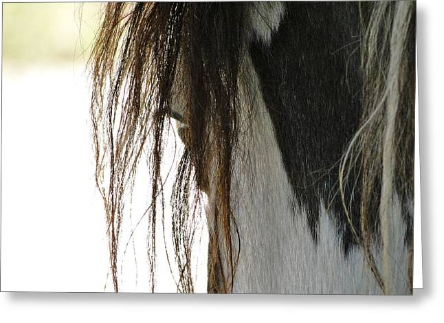 Wild Horses Greeting Cards - Wild Pinto Mustang Greeting Card by Liz Vernand