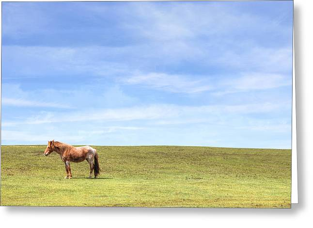 New Forest Pony Greeting Cards - Wild Pony Greeting Card by Joana Kruse