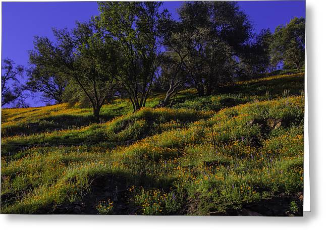 Wild Poppies Greeting Card by Garry Gay