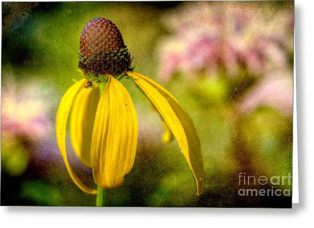Yellow Coneflower Greeting Cards - Wild Soul Greeting Card by Michael Eingle
