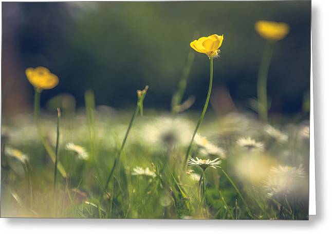 Buttercups Greeting Cards - Wild spring flower display Greeting Card by Chris Fletcher