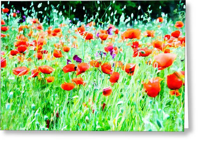Flower Blossom Greeting Cards - Wild Spring Poppies Greeting Card by Marion McCristall