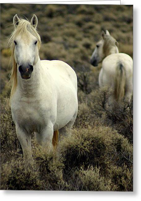 Wild Stallion Greeting Card by Marty Koch