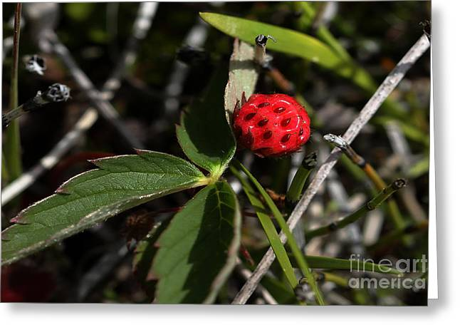 Berry Greeting Cards - Wild Strawberry Greeting Card by Vickie Emms