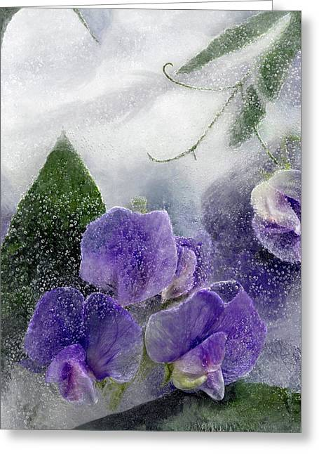 Wild Sweet Peas Greeting Card by Carmen Moise