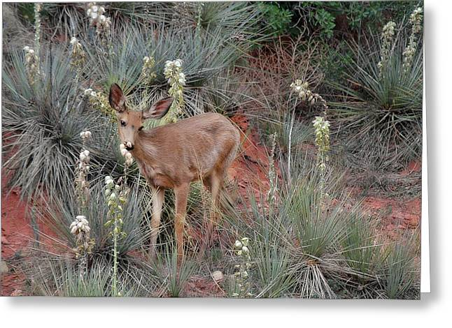Doe Greeting Cards - Wild Times at Garden of the Gods Colorado Greeting Card by Christine Till