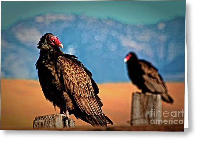 Turkey Buzzard Greeting Cards - Wild Turkey Buzzards Greeting Card by Gus McCrea