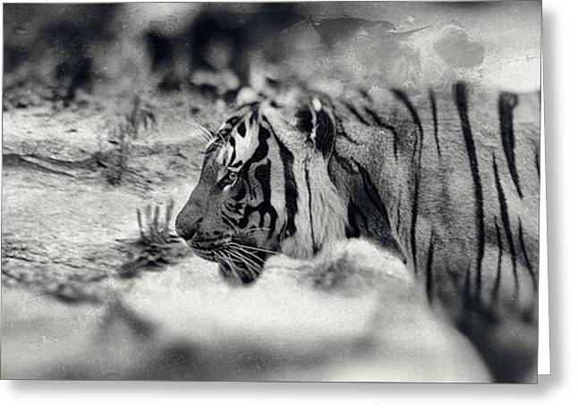 Creative Photography Greeting Cards - Wildcat 3 Greeting Card by SK Pfphotography
