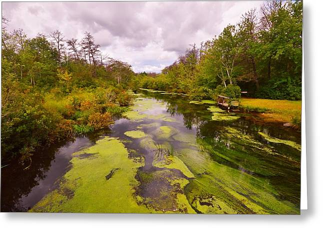 Alga Greeting Cards - Wilderness Creek in the Autumn Woods Greeting Card by Stacie Siemsen