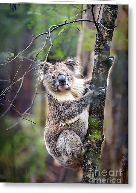 Tree Creature Greeting Cards - Wildest Dreams Greeting Card by Evelina Kremsdorf