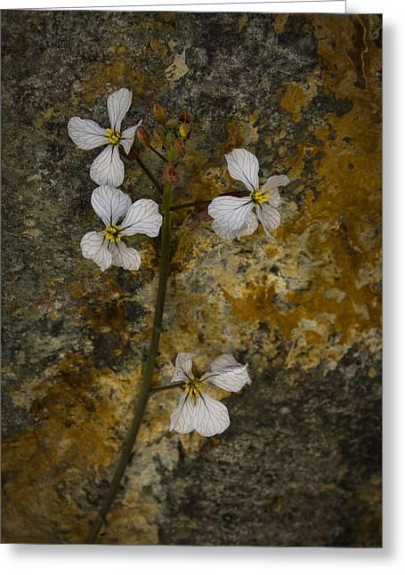 Wildflower Against Rock Greeting Card by Jean Noren