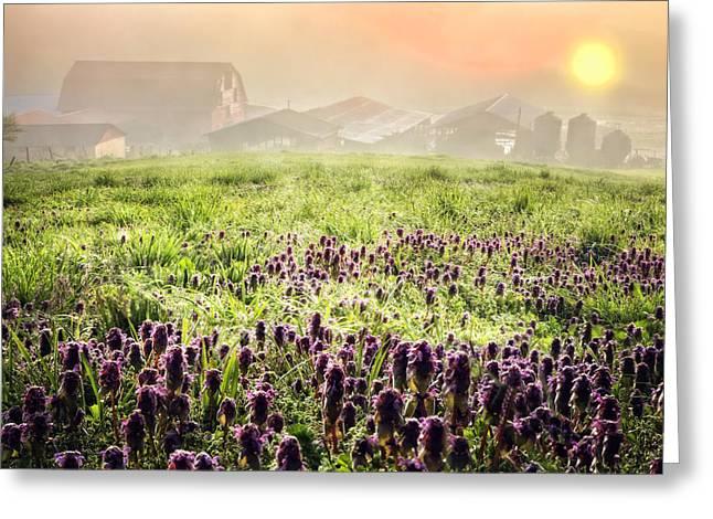 Tennessee Barn Greeting Cards - Wildflower Dawn Greeting Card by Debra and Dave Vanderlaan