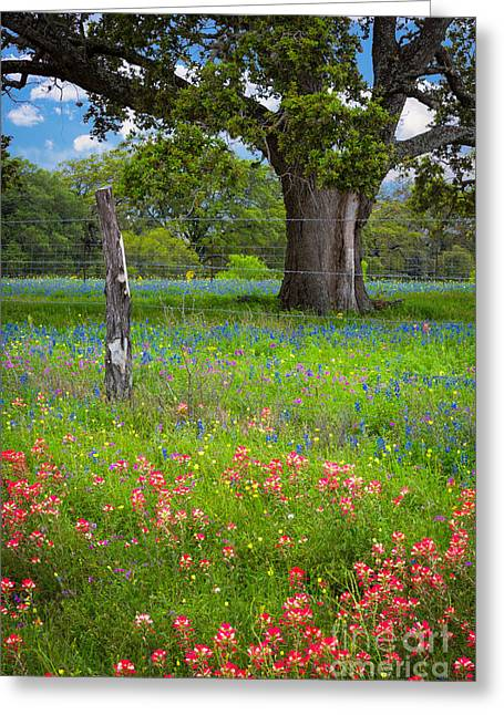 Llano Greeting Cards - Wildflower Field and Tree Greeting Card by Inge Johnsson