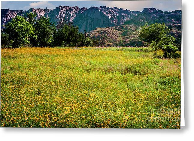 Wildflower Field In The Wichita Mountains Greeting Card by Tamyra Ayles